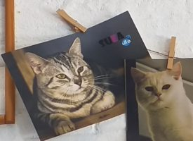Koffie tijd met katten?