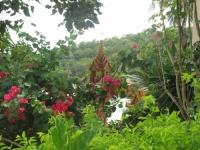 Tropicana Resort Koh Tao (3).JPG