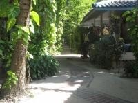 Tropicana Resort Koh Tao (10).JPG